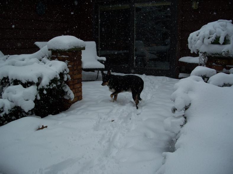 Max enjoying the weather