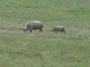 wilds rhino
